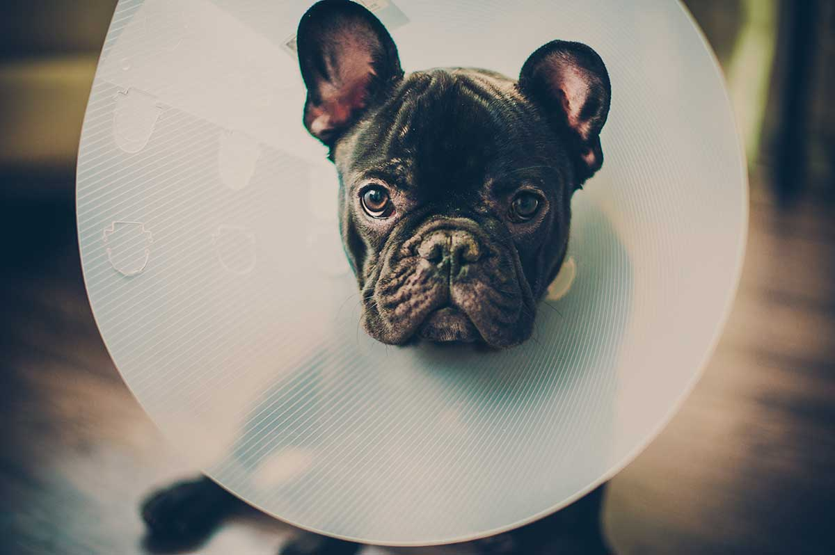 pet surgery and dentistry services